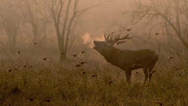 New Wilderness Trailer